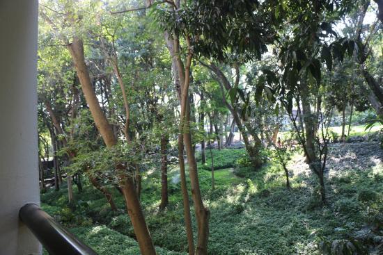 Camino Real Sumiya: Áreas verdes