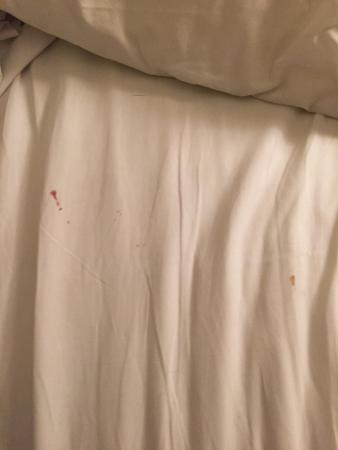 Spruce Grove Inn: Blood on the sheets