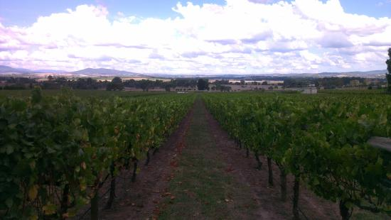 Sticks Winery: Vineyard
