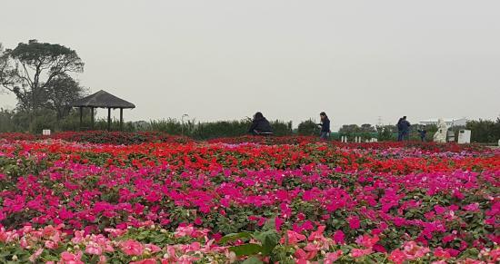中社观光花市