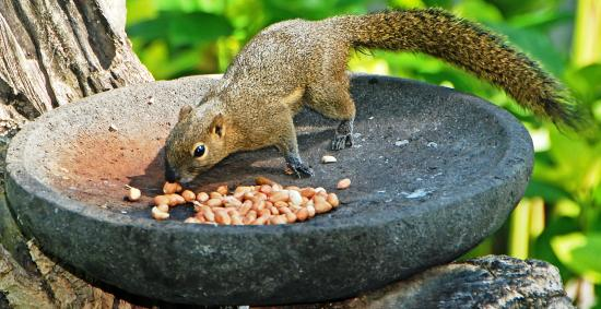 Legian Beach Hotel: squirrel garden