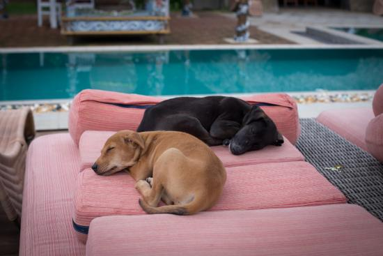 Udekki: Puppies by the pool
