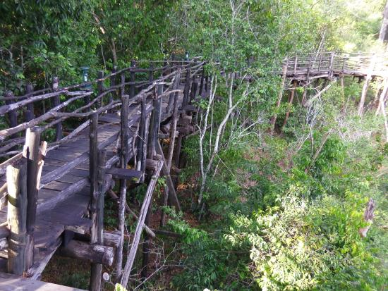 Shimba Rainforest Lodge: The walk-bridge through the jungle