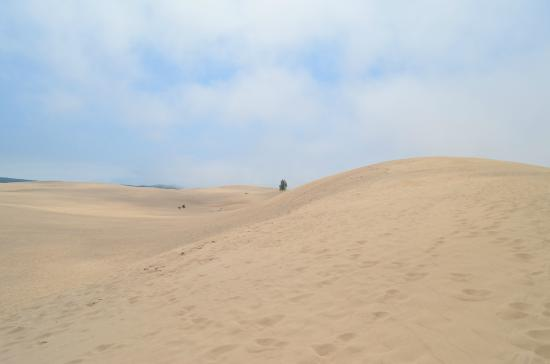 Silver Lake Sand Dunes: sand as far as you can see
