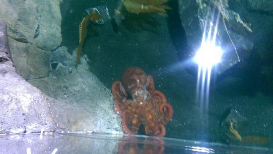 Photo0 Jpg Picture Of San Antonio Aquarium San Antonio