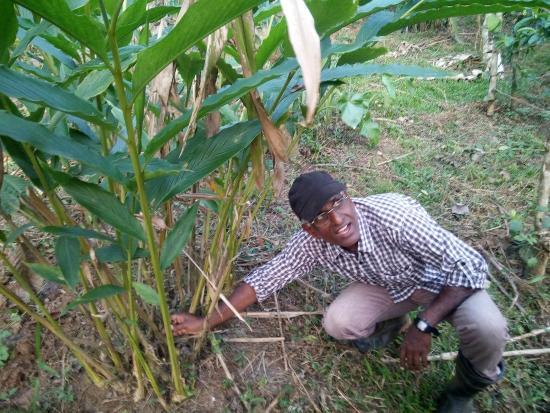 Cheeral Green Homestay : Mr. Soman showing his farm
