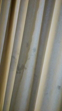 Hotel Gokulam Park: fungus on curtain