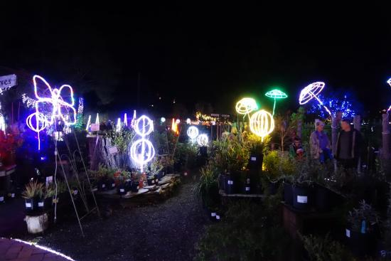 Holiday Lights - Picture of Cambria Pines Lodge, Cambria - TripAdvisor