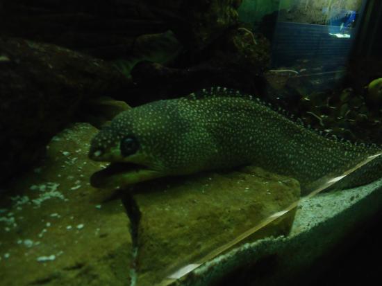 Aquario de Ubatuba - Picture of Ubatuba Aquarium, Ubatuba ...