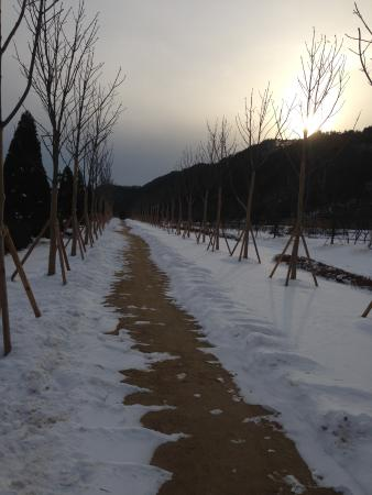 Kensington Flora Pyeongchang: Snow covered garden and beautiful scenery