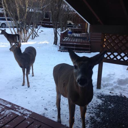 Tallpine Lodges: Deer