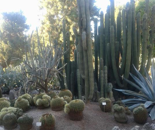 Valencia giardino botanico foto di jardin botanico for Giardino botanico milano