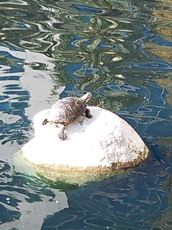DoubleTree Club by Hilton Orange County Airport: Lakeside Turtle
