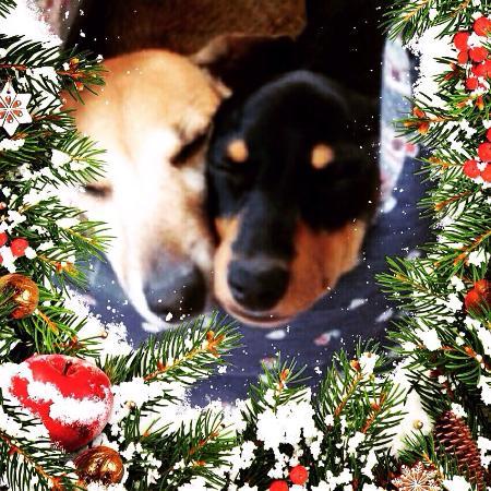 Palazzo Trevi Charming House: Buon Natale a tutti i nostri clienti amici che ci hanno accarezzato
