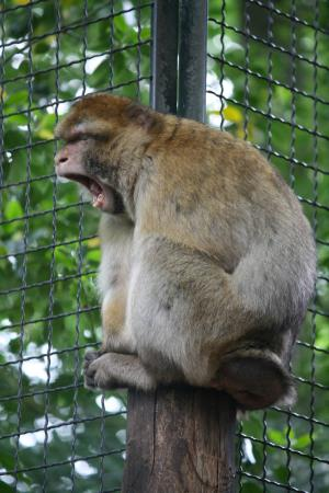 Tierpark Aachen: Are we keeping you up?
