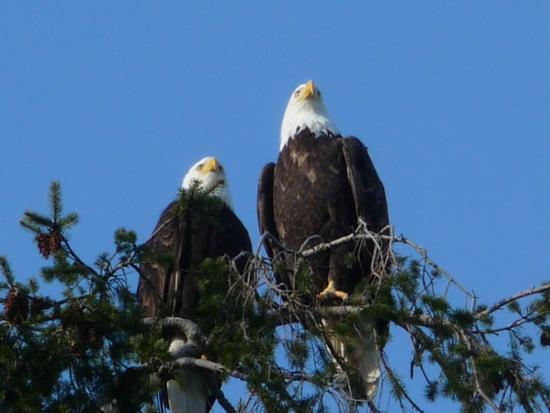 George C. Reifel Migratory Bird Sanctuary : The look outs.