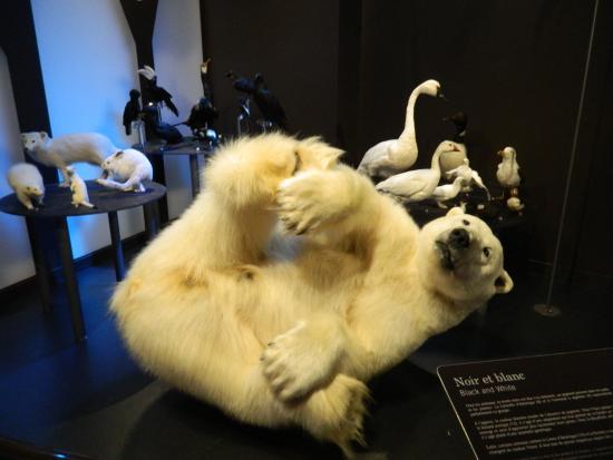 Musee De La Nature Et Des Sciences: une photo a linterieur du musee