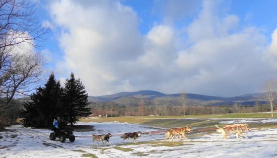 "Valley Snow Dogz: A morning ""mushing"""