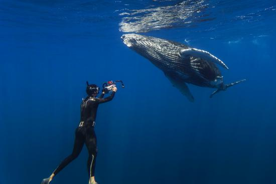 Foa Island, Tonga: Swimming with the humpbacks