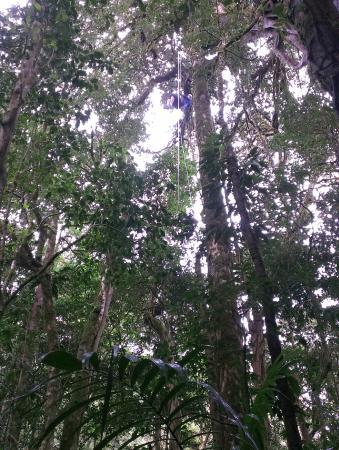 The Original Canopy Tour: Rappelling