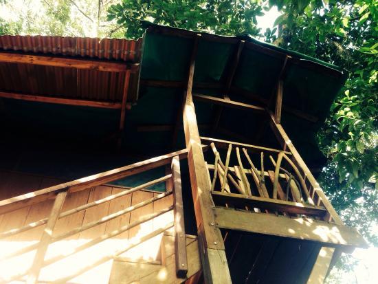 Posada Andrea Cristina: View from bottom of tree house