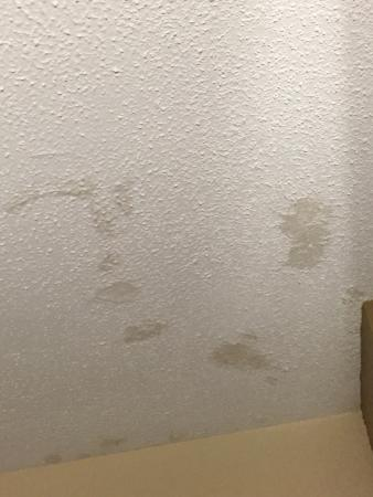 Holiday Inn Gainesville University Center: Stains on ceiling