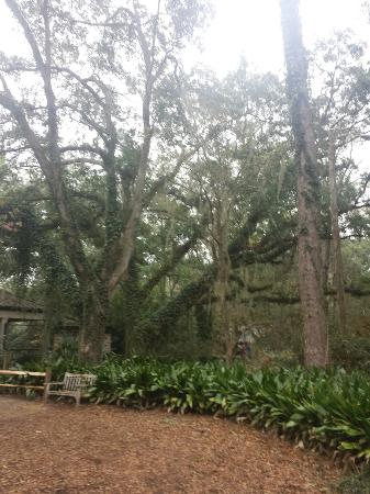 Tallahassee Museum: Such beautiful scenery!