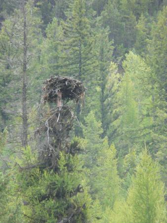 Kootenay Raft Co : Bald Eagle nest