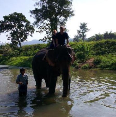 Chiang Mai Elephant Private Tours