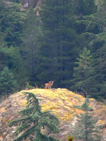 Texada Island, Canada: Deer on rock bluff Mount Shepard