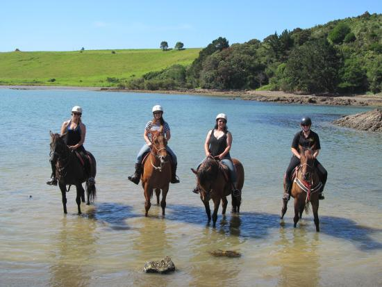 Horse Trek'n: Bit of beach; couldn't get the horses in further than this.