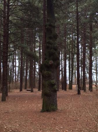 Kohler-Andrae State Park : along the snowshoe trail