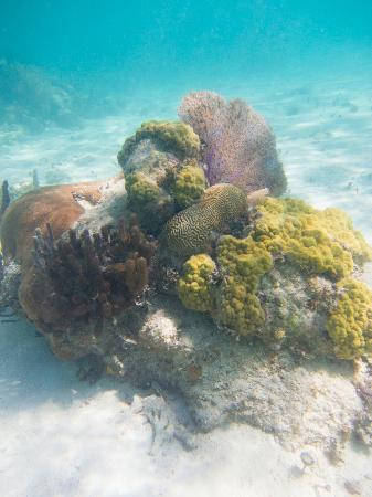 Bacalar Chico National Park and Marine Reserve: coral