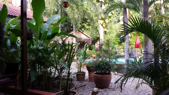 Guesthouse Liam's Suan Dok Mai : garden and pool