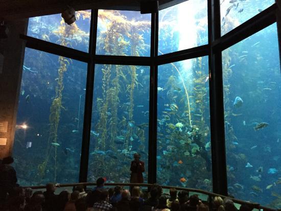 The Kelp Forest Exhibit Picture Of Monterey Bay Aquarium