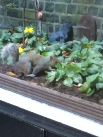 Regency House Hotel: Squirrels visiting the rear garden