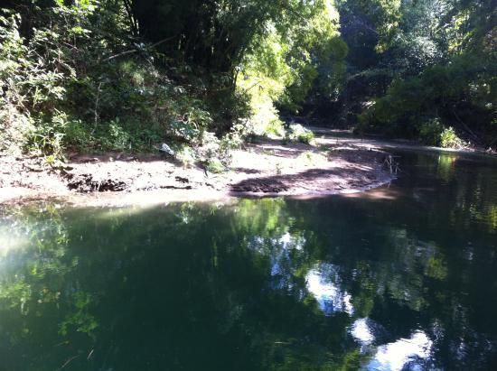 Rastafari Indigenous Village: We swam in this beautiful river. Such beauty all around.