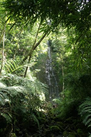 Bike Hawaii Tours: Your hiking destination: a private waterfall
