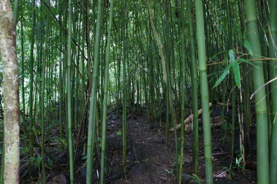Bike Hawaii Tours: Wander through a bamboo forest