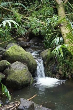 Bike Hawaii Tours: Small streams accompany you for your entire journey