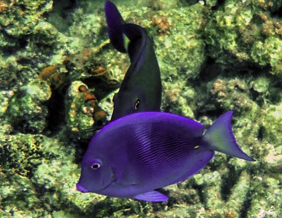 Le Grand Trou Bleu, atoll de Lighthouse Reef : Blue Hole