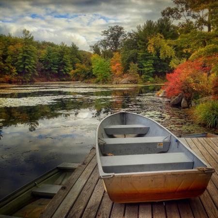 Arrow Park: By the Pond