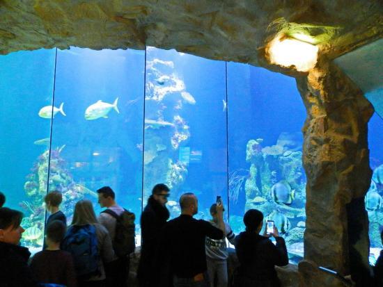Haibecken Shark tank Picture of Haus des Meeres Aqua