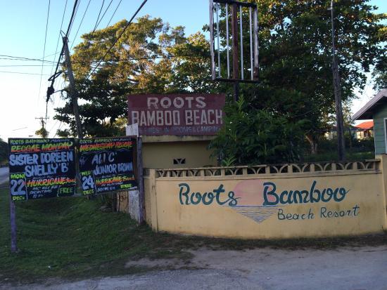 Roots Bamboo: Entrata
