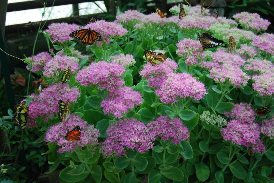 Jardin des Papillons: Fleurs et papillons : explosion de couleurs !