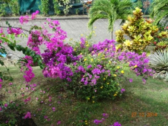 Residence des Iles Martinique: jardin