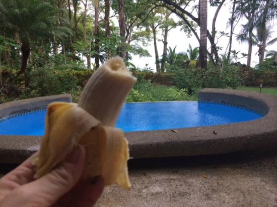 Tucan Terra: Owner's pool next door and variety of banana called an apple banana we used to feed monkeys (and