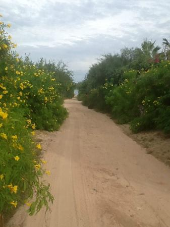 Cabo Pulmo Beach Resort : road to boat launch