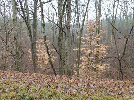 Natchez, MS: Nice winter trees