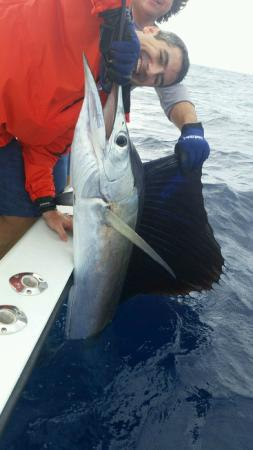 FishCastings: Lone Sailfish caught that day in the area